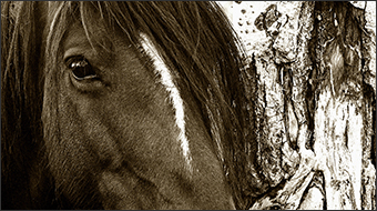 thumb-aspen horse
