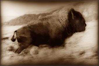 thumb-h145 buffaloe run new -2