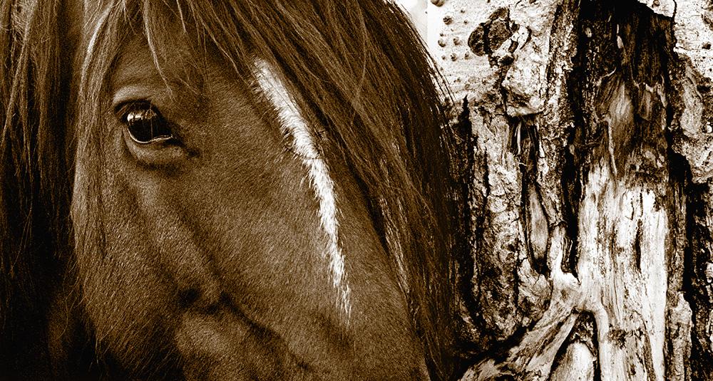 Aspen Horse