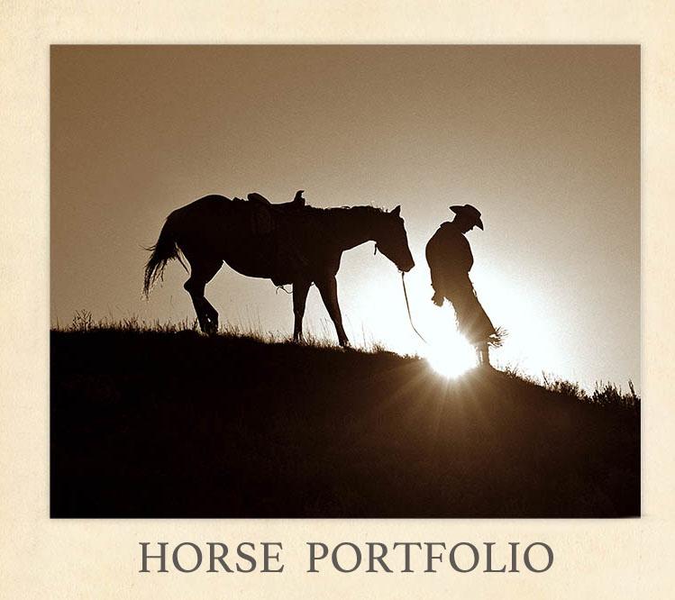 Shane-Knight-Horse-Portfolio